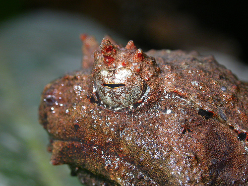 Why So Grumpy Mr. Grumpy Frog?