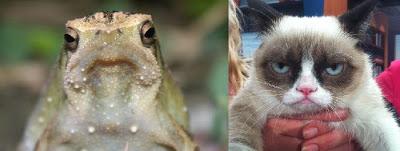 Tard the Grumpy Cat, Meet Tad the Grumpy Frog