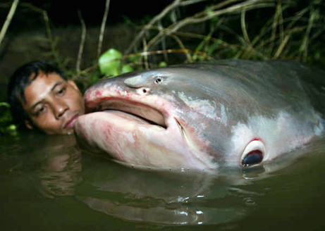 The Ultimate List of Bizarre Catfish Species