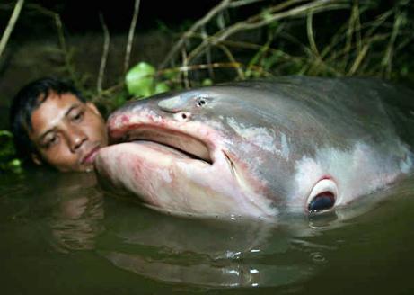 The Ultimate List of Bizarre Catfish Species