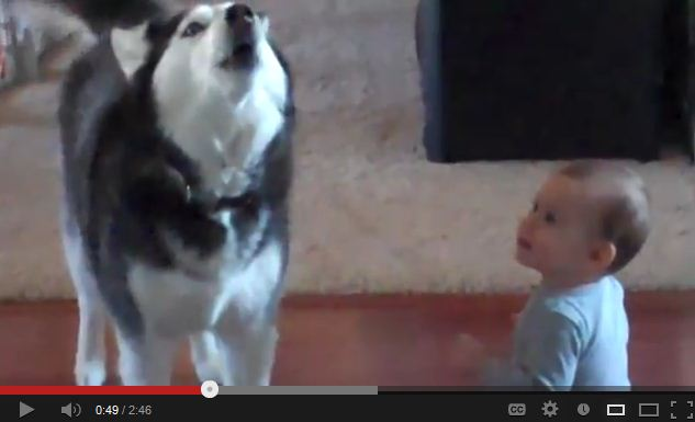 Husky & Baby Speak the Same Language