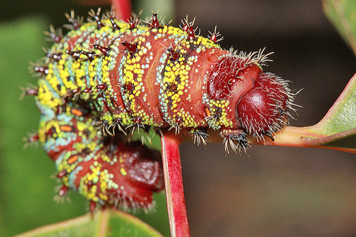Who Invited the Ugly Christmas Sweater Caterpillar?