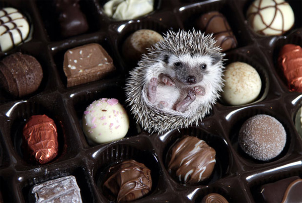 10 of the Cutest Photos of Baby Hedgehogs!