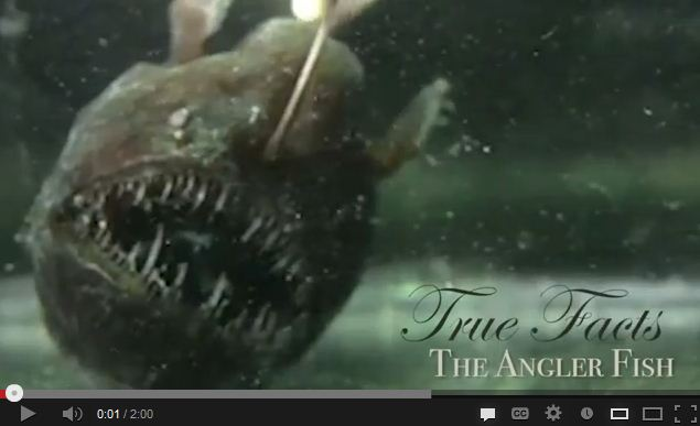 True Facts About the Anglerfish (LOL's Galore)
