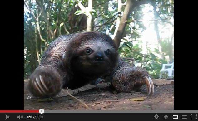 Recorded Footage of a Sloth Attack