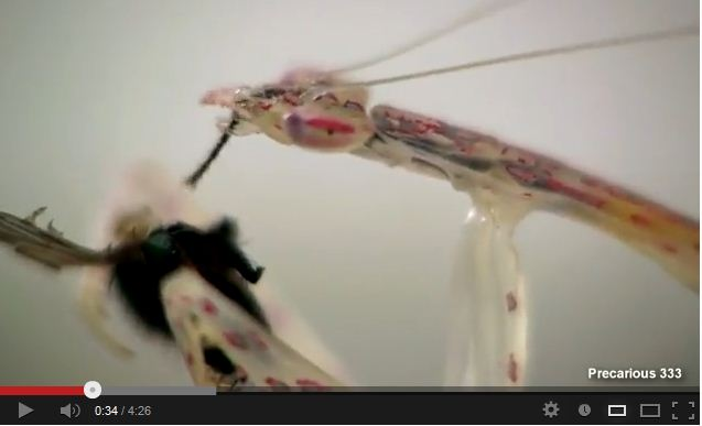 How Appetizing! Watch As Food Travels Through This Glass Mantis.