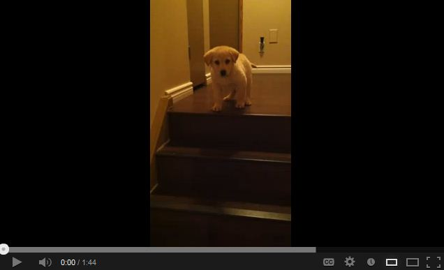 Warning: Your Heart Might Explode After Watching This.
