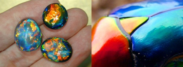 Splendid Scarabs Are Living, Gleaming, Queensland Opals