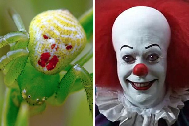 This Clown Crab Spider Looks Exactly like Steven King's 'It'