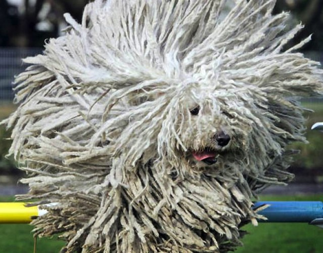 I'm Lovin' This Rasta-inspired Komondor Dog, Mon!