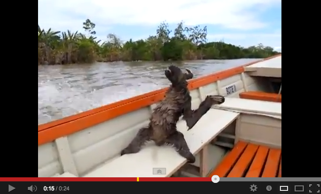 Sloth Casually Enjoys a High Speed Boat Ride