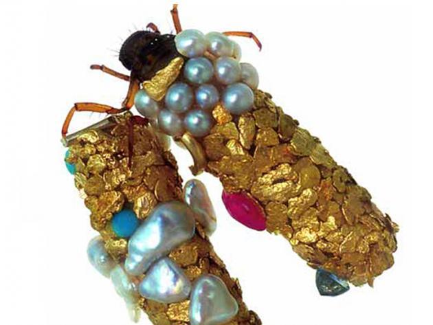 caddisfly larvae (6)