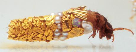 caddisfly larvae (4)