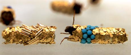 caddisfly larvae (3)