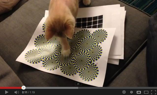 Cat vs. Rotating Snakes Optical Illusion