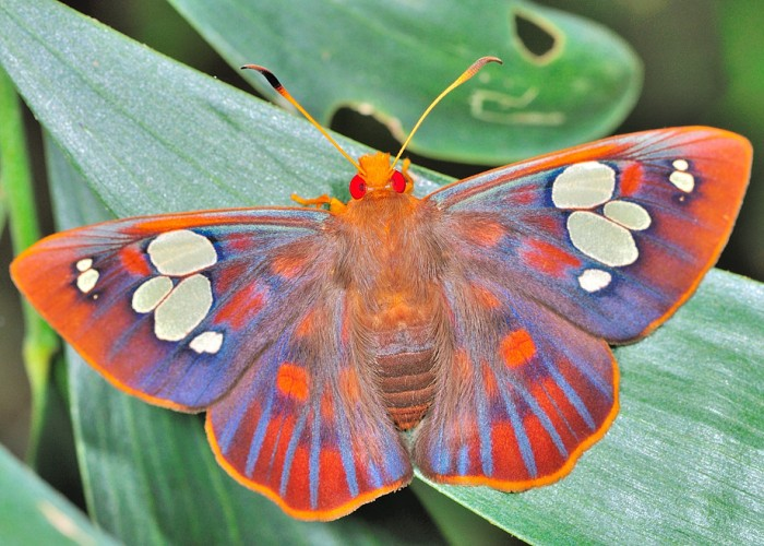 From HUMAN THUMB THING to Beautiful Butterfly. Nature is Completely Nuts!