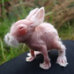 The Awkward Years: Strange Hairless Rabbit Goes From Bald to Beautiful!