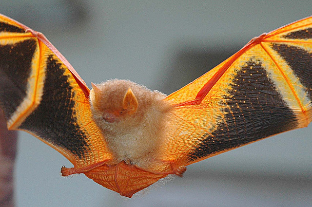 The Painted Bat IS Halloween… Freaky Yet Fabulous!