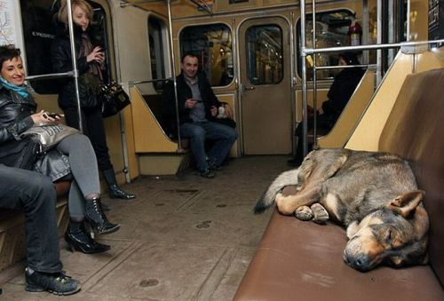 Stray Dogs of Moscow (6)