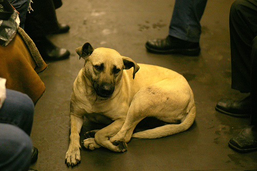 Stray Dogs of Moscow (1)