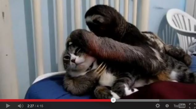 Sloth Cuddles Cat.