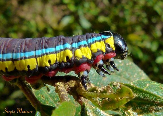 The Colors on This Caterpillar Are Absolutely Out of this World! Looooook!