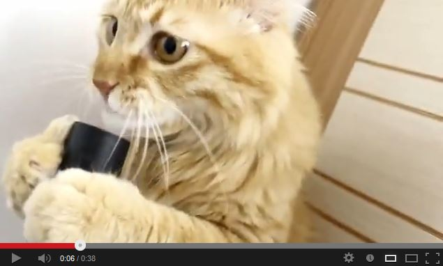 A Cat and his Vacuum. More Proof Cats Are The Weirdest Creatures Ever.