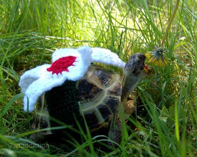 tortoise cozies, tortoise sweater (6)