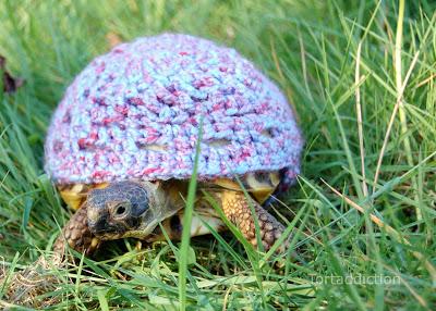 tortoise cozies, tortoise sweater (2)