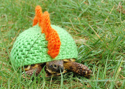 tortoise cozies, tortoise sweater (5)