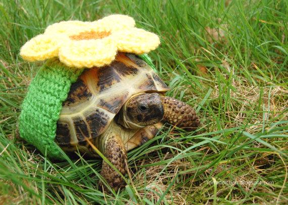 tortoise cozies, tortoise sweater (4)