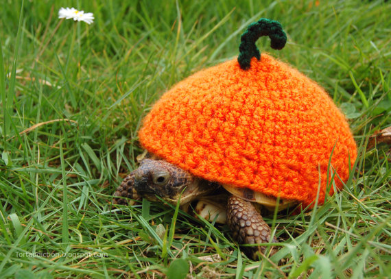 Tortoise Cozies Are All the Rage This Season!