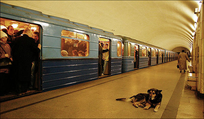 Stray Dogs of Moscow (5)