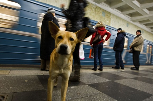 Stray Dogs of Moscow (2)