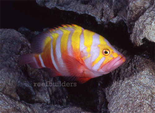 Five Of the Rarest Marine Aquarium Fish