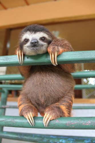 TONS of Sloth Photos and .Gifs That Are Guaranteed to Make Your Heart Explode