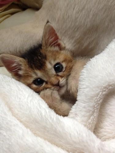 rescue kitten, Wasabi-Chan, mushroom kitten
