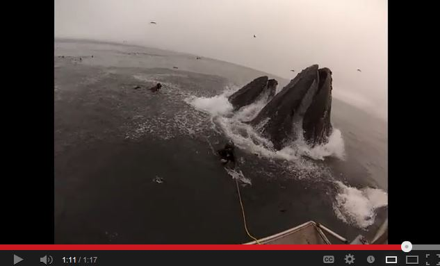 Video: Whales Almost Swallow Divers Alive!