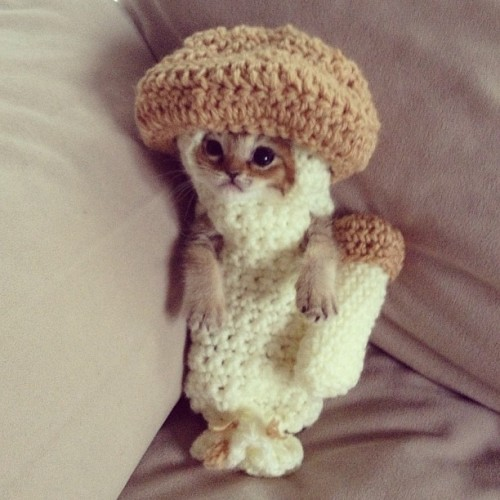 Rescue Kitten, Wasabi-Chan, Taking the Internet by Storm… in a Mushroom Costume