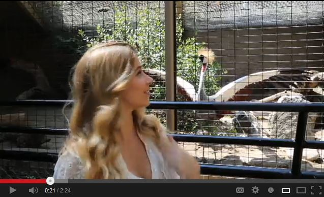 Join Me at the Zoo With an African Grey Crowned Crane!