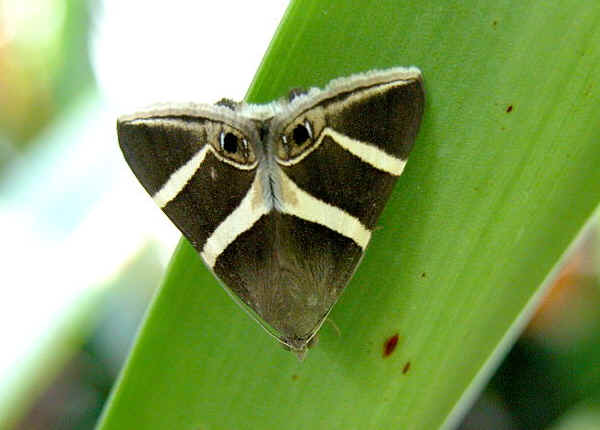 Judgmental Moth is Always Watching, Judging.