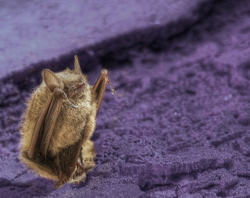 sassy bats, upside down, dancing (5)