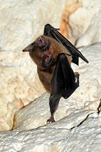 sassy bats, upside down, dancing (4)