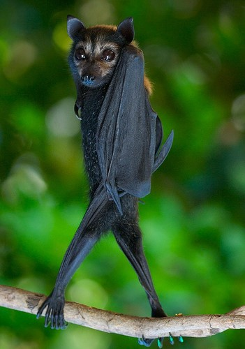 sassy bats, upside down, dancing (3)