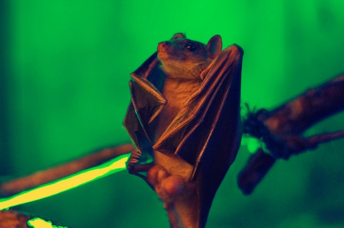 sassy bats, upside down, dancing (1)
