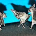 sassy bats, bats upside down, dancing bats