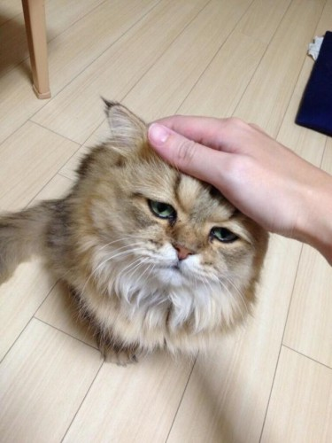 "Internet, Meet Foo-Chan: ""Disappointed Cat"" Set to be the Next ""Grumpy Cat"""
