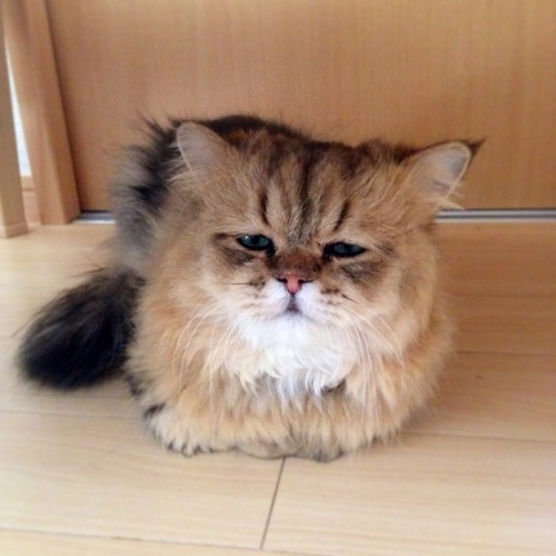 foo chan, disappointed cat (2)