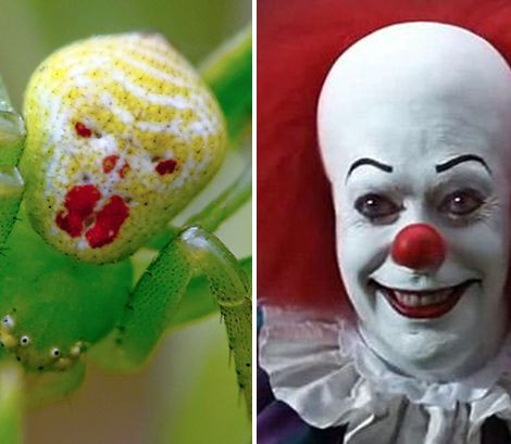 clown spider, pennywise spider, steven kings it, halloween costume ideas