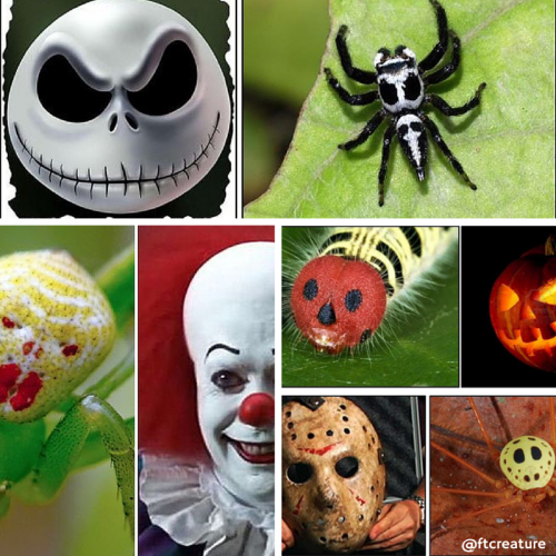 7 Creepy Crawlers Always In the Halloween Spirit